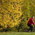 Москва проведет аукционы на право торговли в четырех парках